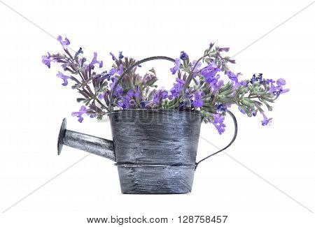 Old aluminium watering can with purple flowers isolated on white background