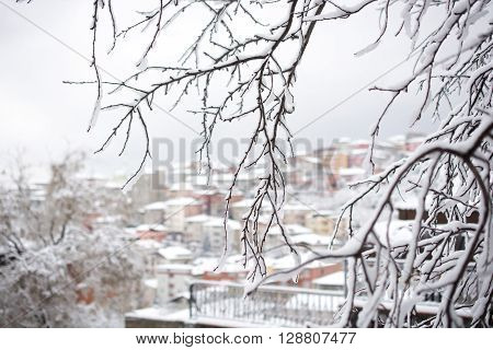 Winter branches of trees in snow on background snow and white sky