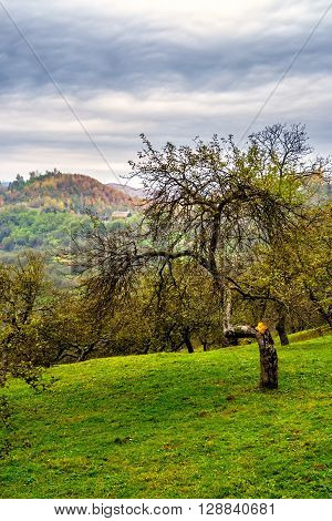 Apple Tree Garden On Hillside Meadow In Mountain