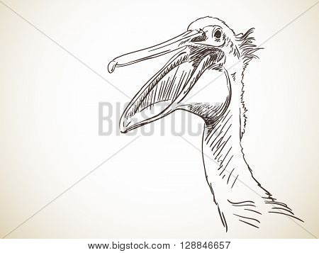 Sketch of pelican's head with open beak Hand drawn illustration