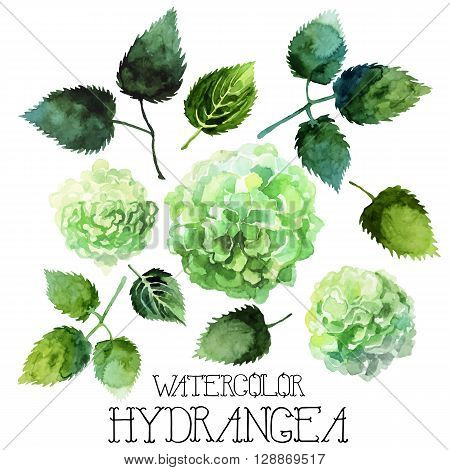 Watercolor hydrangea set isolated on white background. Vector floral design