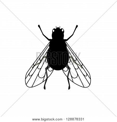 Fly close-up with transparent wings. Insect have the ability to fly with transparent wings, thin legs and antenna isolated on white background. Small annoying buzzing creature. Vector illustration