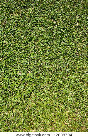 Wallpaper of Green Grass