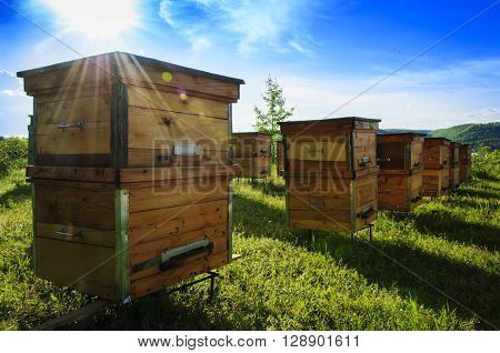 apiary beehives honey  Insects pollen Bees wax