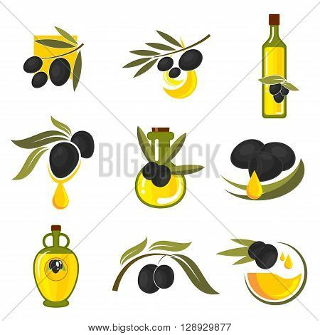 Spanish black olives symbols of olive tree branches with fresh fruits and bottles of healthful extra virgin olive oil. May be use as vegetarian nutrition theme, recipe book or food packaging design
