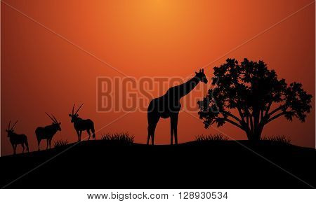 Silhouette of antelope and giraffe at the morning