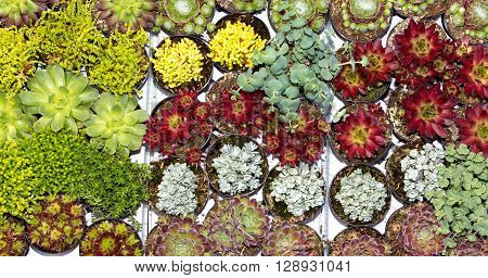 Variety of differnt succulents in a garden centre. poster