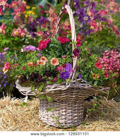 Basket With Beautiful Early Flowering Plants.