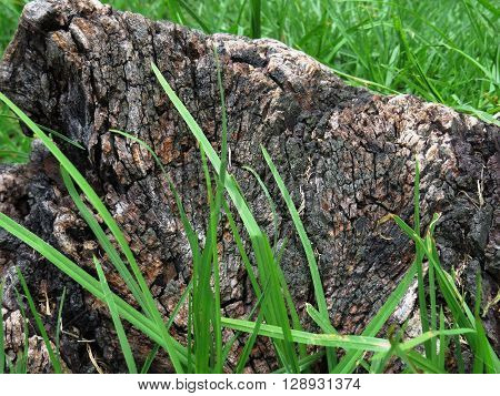 old loose bark of a tree in green grass sunny summer day