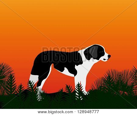gazing into the distance a dog standing on the grass