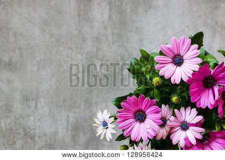 Marguerite Daisy On Concrete Background