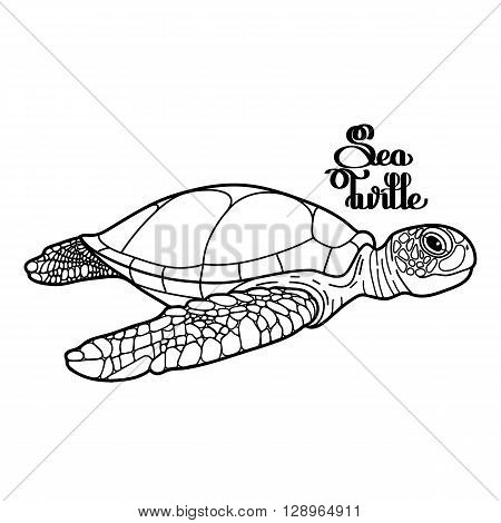 Graphic Hawksbill sea turtle drawn in line art style. Ocean vector creature isolated on white background. Side view. Coloring book page design