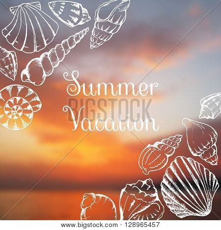 Sea shells line art summer vacation blurred photo background