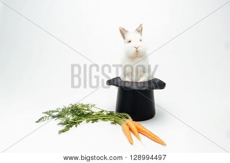 Rabbit in a hat and carrot isolated on a white background