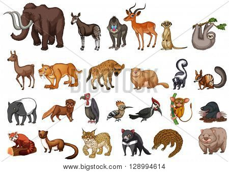 Different type of wild animals on white illustration