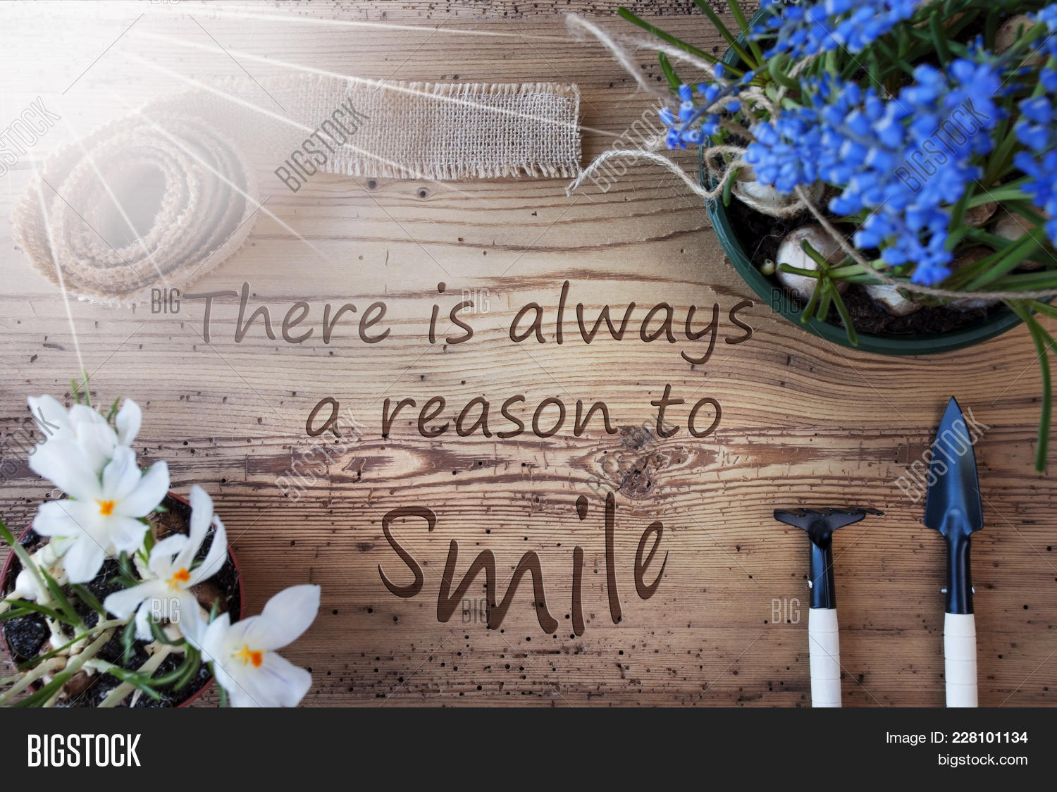 English quote there image photo free trial bigstock english quote there is always a reason to smile sunny spring flowers like grape hyacinth mightylinksfo
