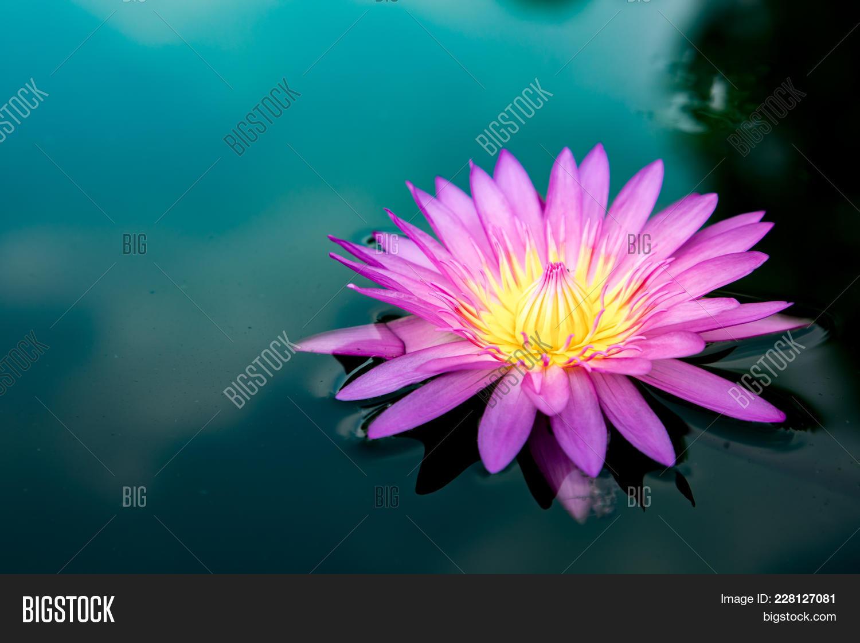 Lotus Flower Nature Image Photo Free Trial Bigstock