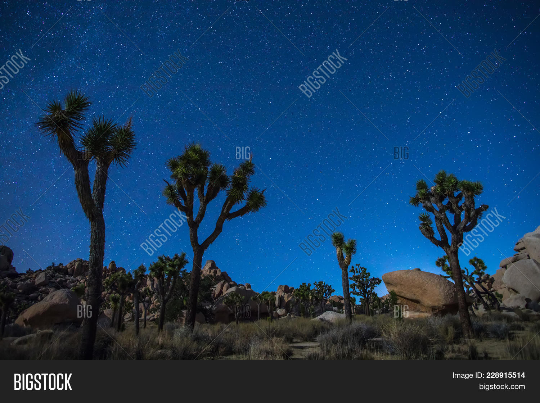 Joshua Trees Night Image Photo Free Trial Bigstock