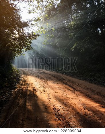 Footpath Or Dirt Track Through Forest Illuminated By Sunbeams Through Fog