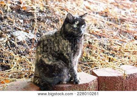 A Tortoiseshell Cat Sitting On A Retaining Wall.