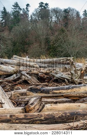 A View Of A Pile Of Driftwood With Trees Behind.