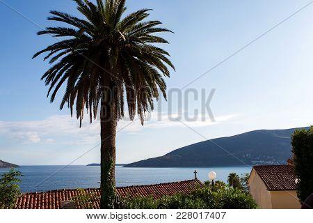Sea Views Through Tall Palm Trees In The Montenegro Town Of Herceg Novi