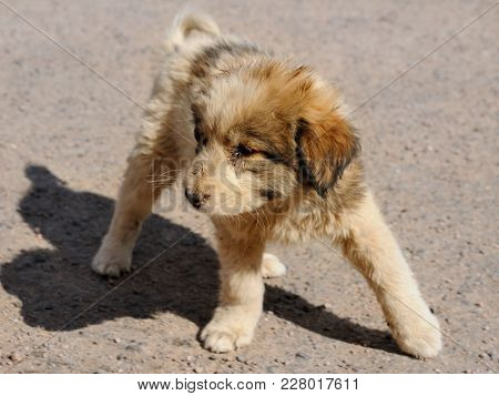 A Cute Puppy Is Taking Its First Steps, Aqaba, Jordan