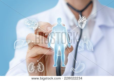 Doctor Examines The Internal Organs On A Blue Background.