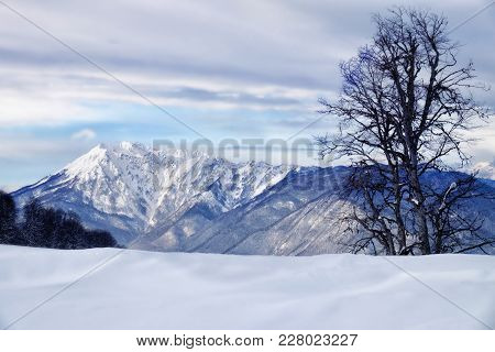 Beautiful Winter Landscape With Mountain Rocks Covered With Snow And Tree