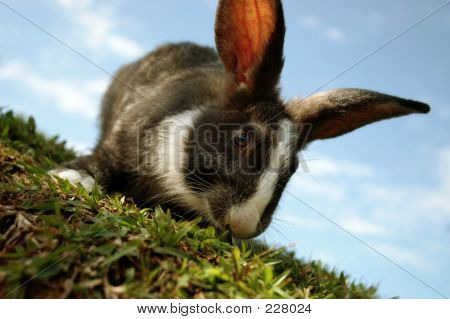 Rabbit On A Hill