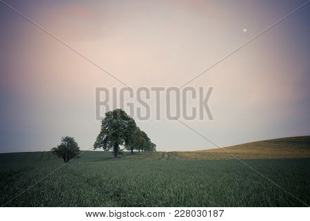 Trees On The Spring Fields At Evening