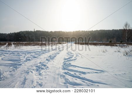 Car Traces On The Snow. Forest. Sunny Day
