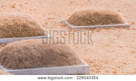 Three Burial Mounds With Concrete Base  Bathed In Sunlight