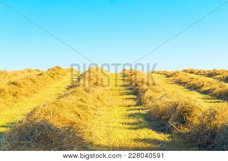 To Dry The Chopped Hay In A Row