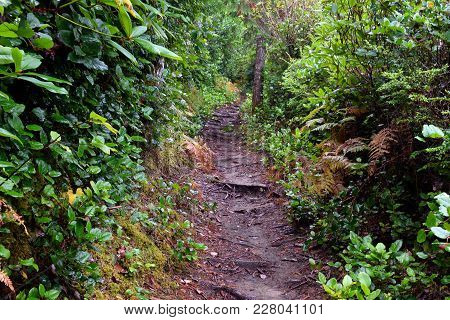 Hiking Trail With Roots Acting As Natural Steps Up The Mountainside.