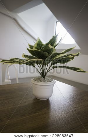 Succulent Plant Potdecorated On Wooden Table, Stock Photo