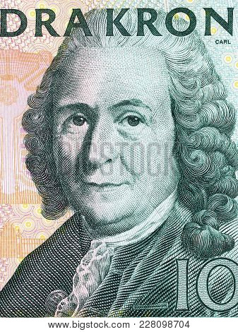 Carl Linnaeus Portrait From Swedish Money - Kronor
