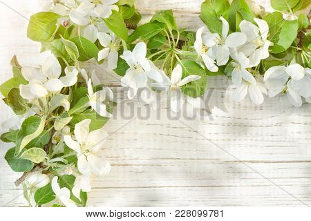 Large Apple Tree Flowers On A White Wooden Background. Place For Text