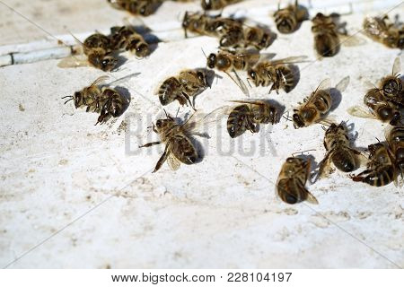 Dead Bees In Front Of Beehive After Winter