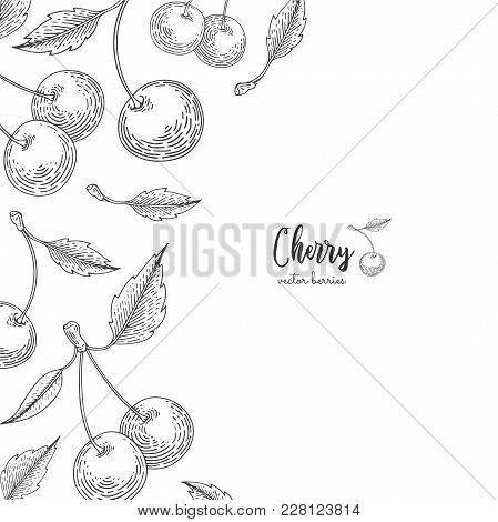 Hand Drawn Illustrations Of Cherries Isolated On White Background. Berries Engraved Style Illustrati