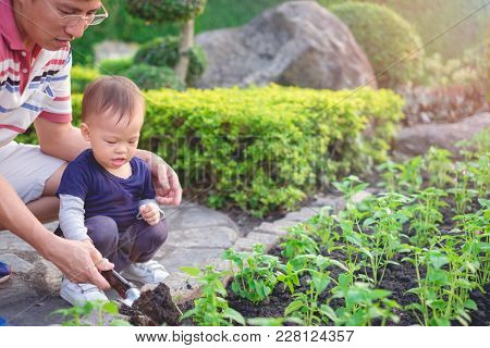 Asian Father Teaching Cute Little 18 Months / 1 Year Old Toddler Baby Boy Child Planting Young Tree