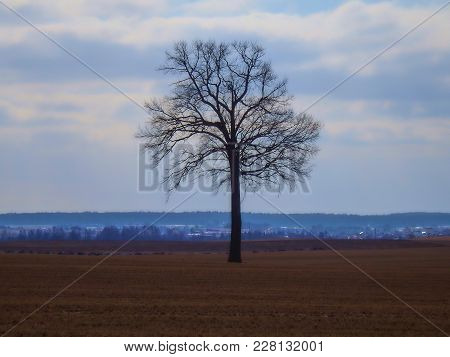 Single Tree On Farmyard Fields. Winter Landscape With Blue Sky And Clouds