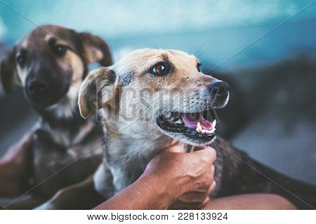 Hostess Caresses The Dog, The Animal Looks Away, Something Distracted Him