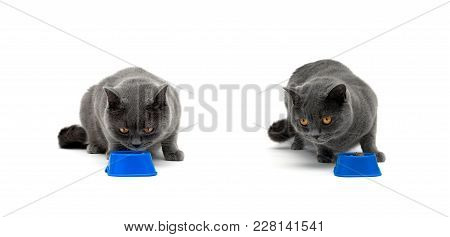 Gray Cat Sitting Near A Bowl With Food. White Background - Horizontal Photo.