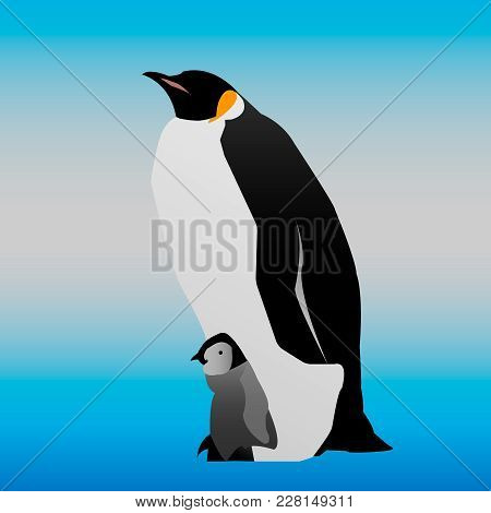 The Penguin Is Standing With His Cub.  Penguin With His Baby Bird