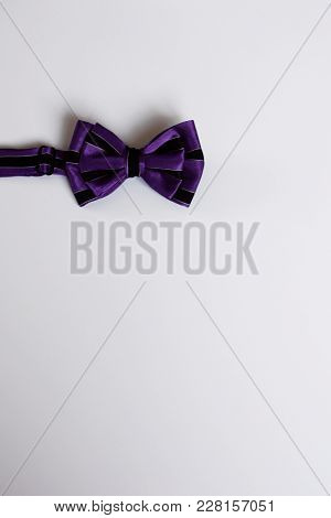 Purple Bow Tie With Black Stripes On White Background. Template For Greeting Card With Copy Space Fo