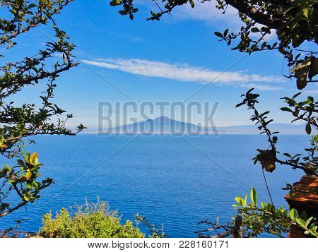 Tree-framed View Across The Water Of Madeira Bay