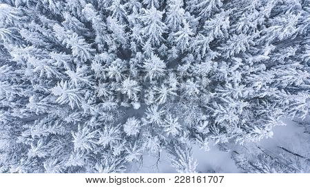 Drop Down View Of Snow Covered Forest. Winter Fairy Tale.
