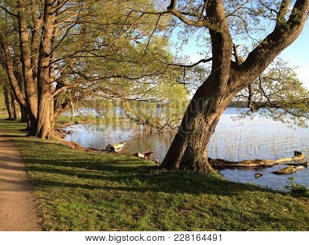 Lake With Trees. Lake With Trees Near By Soro In Denmark. Lakeside Trees In Autumn.