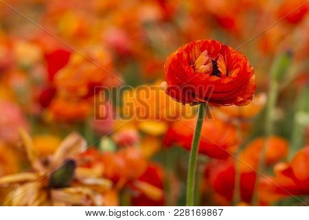 Background, Beautiful, Beauty, Bloom, Blossom, Bright, Closeup, Color, Colorful, Day, Field, Flora,